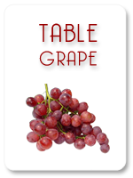 TABLE GRAPE